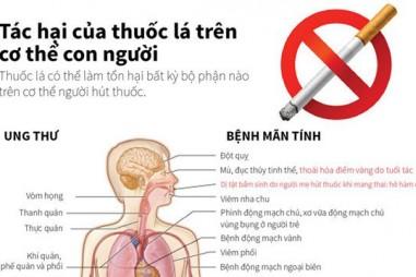 Tác hại của thuốc lá trên cơ thể con người