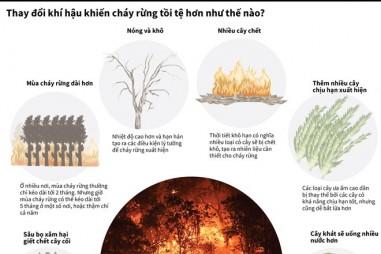 Biến đổi khí hậu khiến nạn cháy rừng tồi tệ thế nào?
