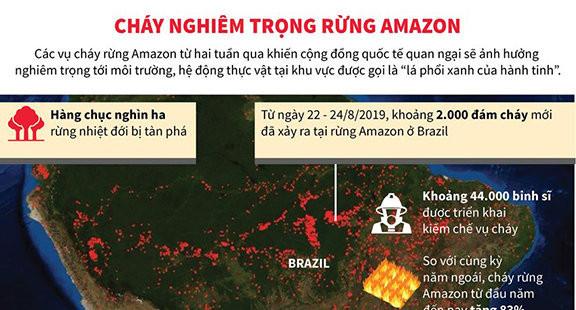 Những con số thống kê từ vụ cháy rừng Amazon, Brazil