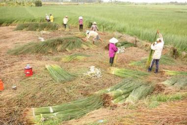 Năm 2020: Vĩnh Long hỗ trợ đào tạo nghề cho 7.000 lao động nông thôn