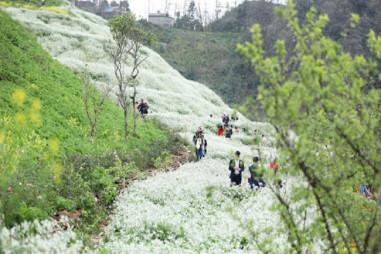 Ngất ngây trước thung lũng hoa xuân Fansipan